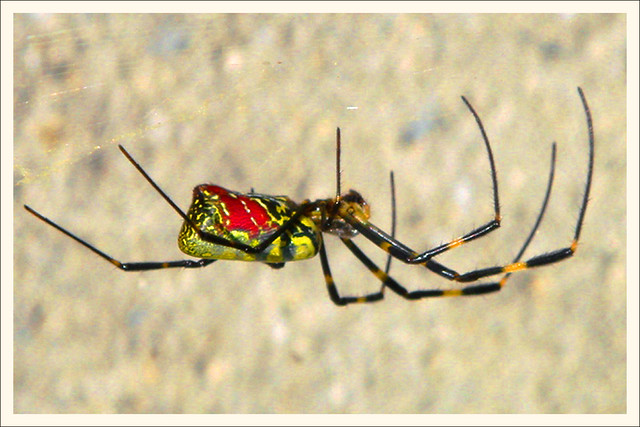 Spider, Sony DSC-T11