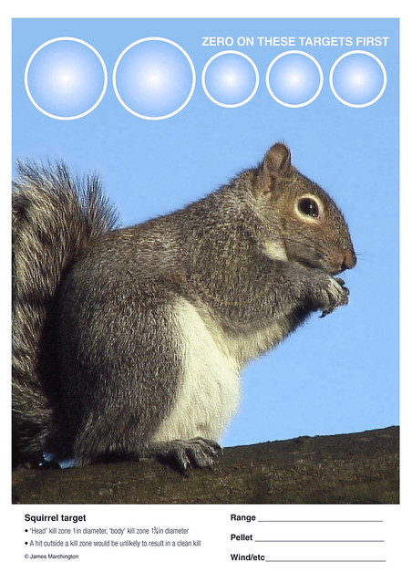 Zany image with printable squirrel target