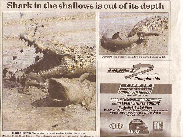 Bull Shark Vs. Saltwater Crocodile | Flickr - Photo Sharing!