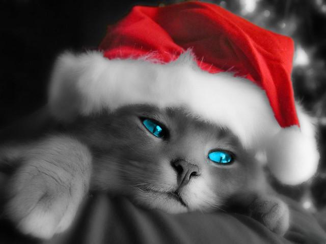 Christmas Cat */* Gatinho Natalino  ***  + de 40 mil visitas em 1 mês!