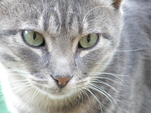Cat • Γάτα