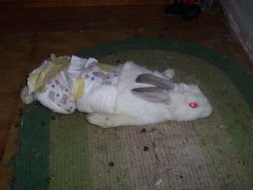 Felicit a portata di zampa un fiocco di neve a - Lettiera coniglio nano ...