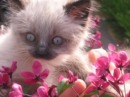 springtime charlene