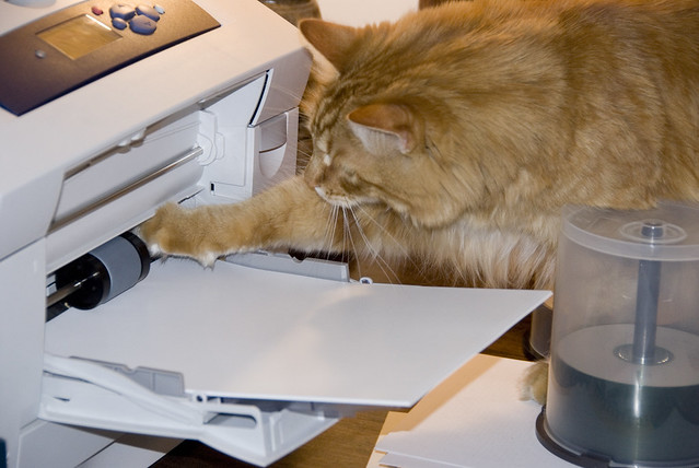 Gillie helping to jam the printer