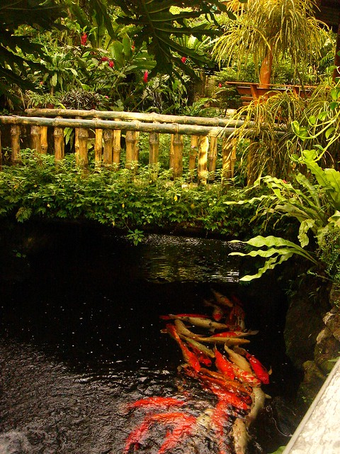 Bamboo bridge over koi pond flickr photo sharing for Koi pond bridge