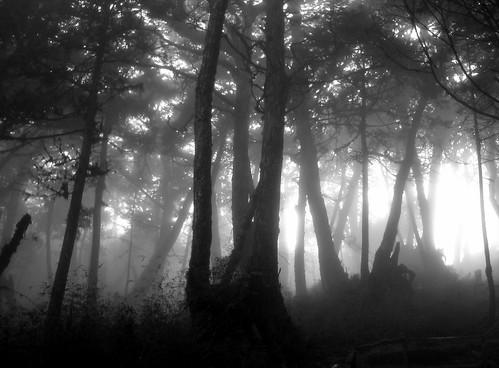 trees bw white mountain black nature monochrome forest woodland mono grayscale 宜蘭 黑白 blackdiamond 太平山