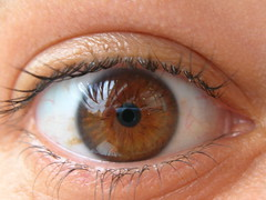 iris, brown, eyelash, close-up, eye, organ,