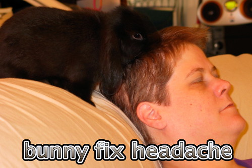 bunny fix headache