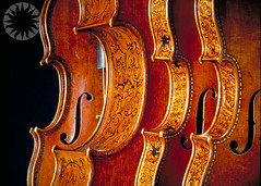 classical music, string instrument, violin, musical instrument, double bass,
