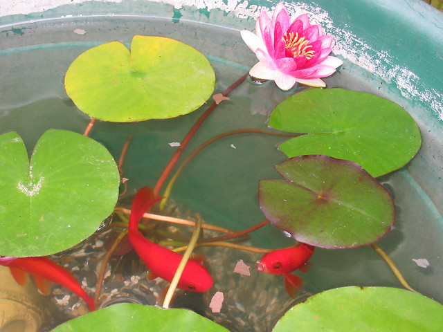 Container Pond Flickr - Photo Sharing!