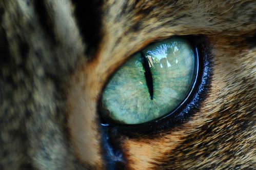 Spooky Eye by Rickydavid