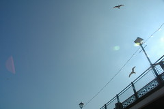 sea gulls 04