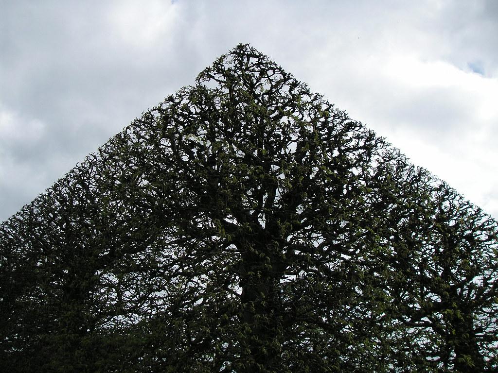 Square Trees 1