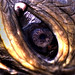 The Spiral Galaxy in the Green Turtle Eye by EncinoMan