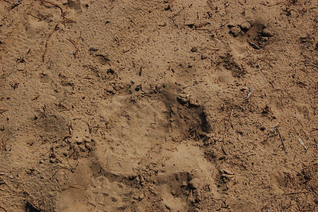 Sandy soil on the northland arboretum site flickr