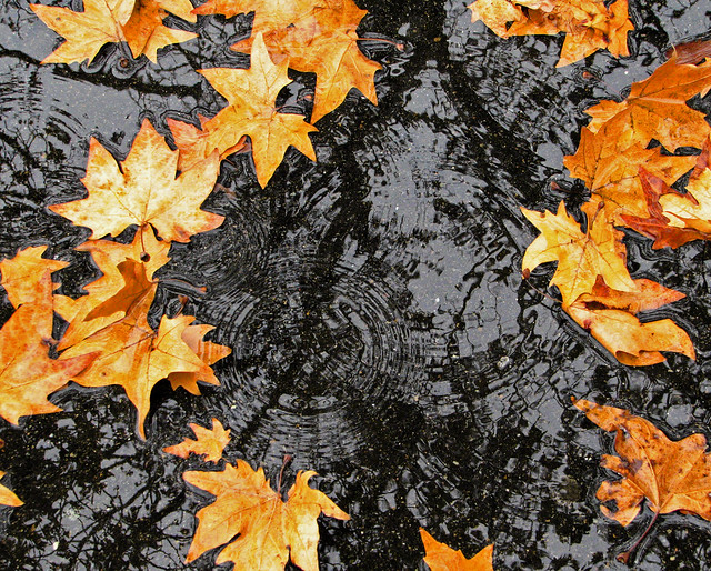 raindrops and autumn leaves | Flickr - Photo Sharing!
