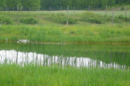 green water reflections spring pond audubonsociety springtime verdure birdwalk pondhillfarm petoskeyregionalaudubonsociety