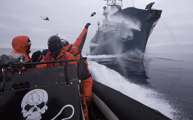 2009-02-02 Sea Shepherd crew member hurls a bottle of rotten butter