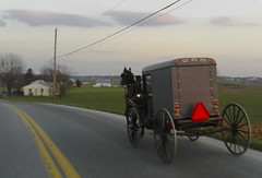 vehicle, transport, mode of transport, horse and buggy, carriage,