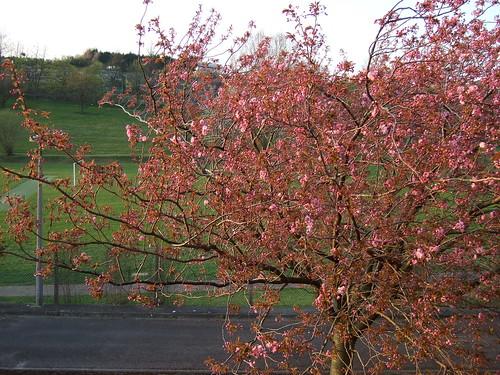 england spring preston 英格兰