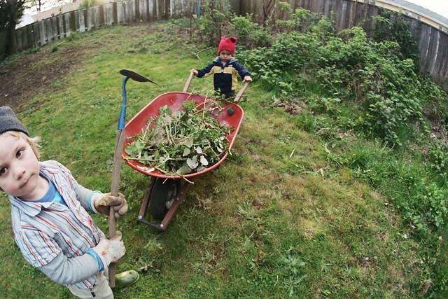 Garden Work Day One Everett And Truman Helping With Wheelbarrow Of Blackberries Flickr