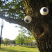 Trees with Eyes by Kyle Jones