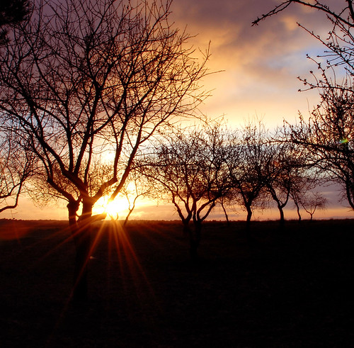 life light love sunrise bravo thankyou searchthebest heart cure naturesfinest blueribbonwinner magicdonkey dujarandille