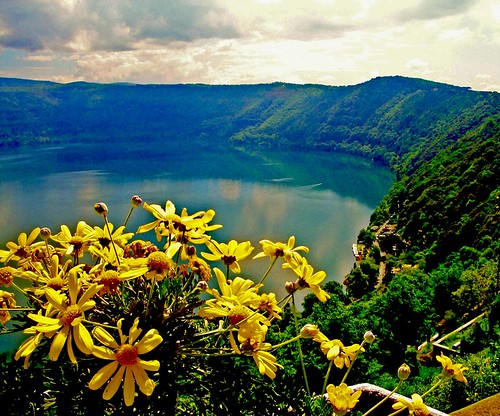 yellow flowers by the lake