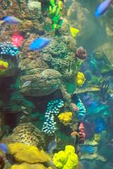 Coral Reef Display Brighton