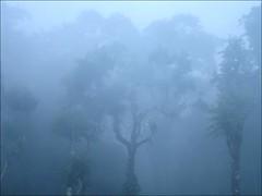 Summer Morning in Madikeri