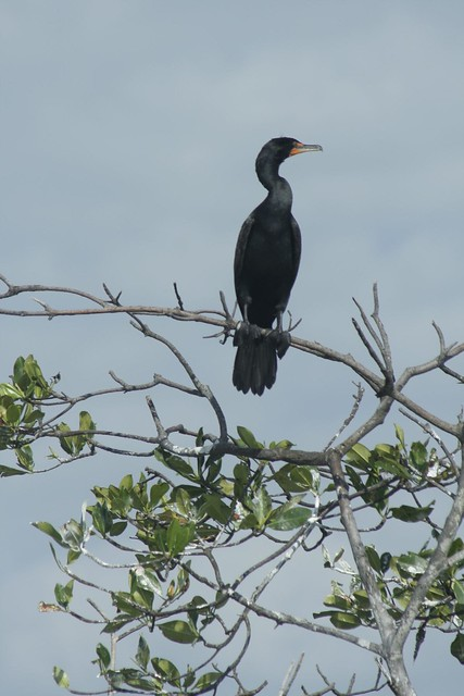 Honduras Bird Tour