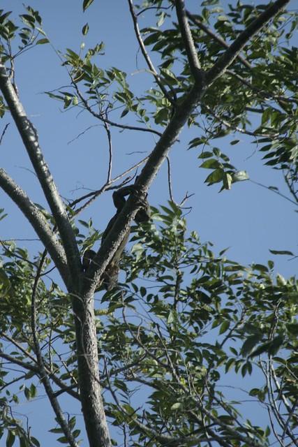 Placencia Belize Jungle Tours