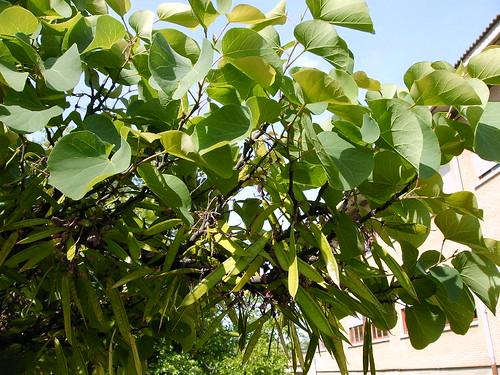 Foto Blog De Nacho San Miguel Arboles Ornamentales De