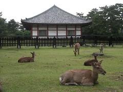 Nara 2007