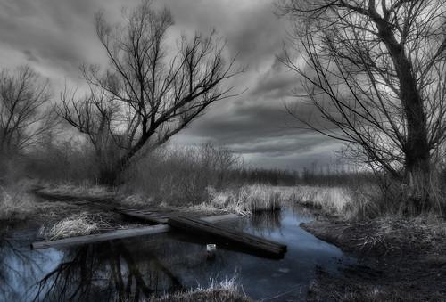 trees reflection water clouds mi crossing mud trail placid causeway baldmountain lakeorion utatafeature