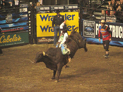 animal sports, rodeo, cattle-like mammal, bull, event, sports, bull riding,