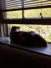 Neko watching birds