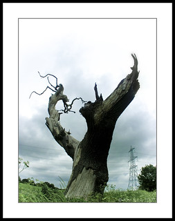 Petrified Tree ©
