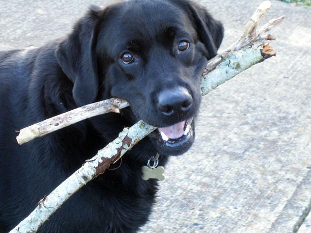 Two sticks. . .
