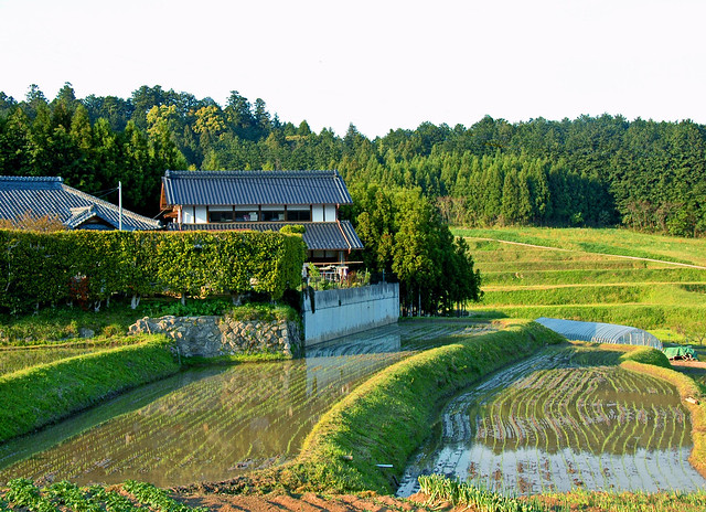 Photo for Terrace farming meaning