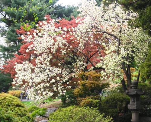 Japanese flower garden flickr photo sharing for Flowers for japanese gardens