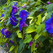 Small photo of Flowers in Ein Hod