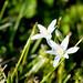 Wild flower in grass