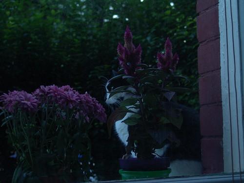516817959 cbb0c957ed Schottland 2005   Tag 7   little Pieschen