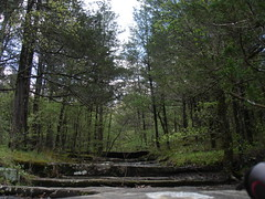 wetland, woodland, rainforest, tree, riparian forest, old-growth forest, forest, natural environment, wilderness, state park, biome, temperate broadleaf and mixed forest, temperate coniferous forest,
