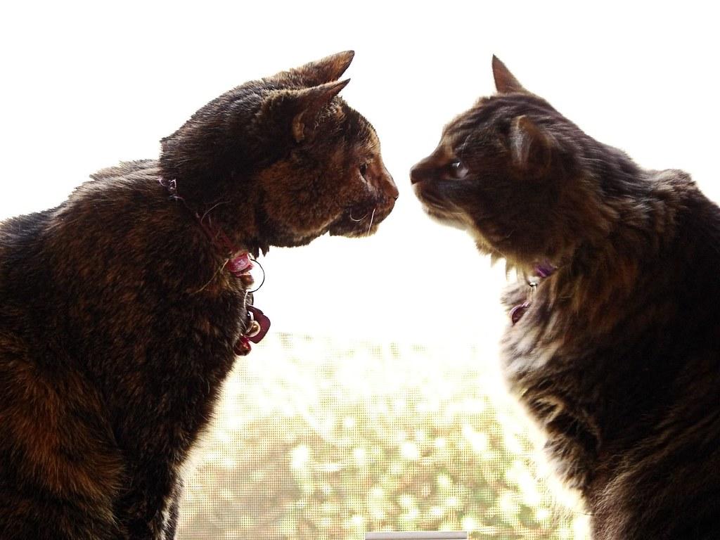 """Bite me!"""