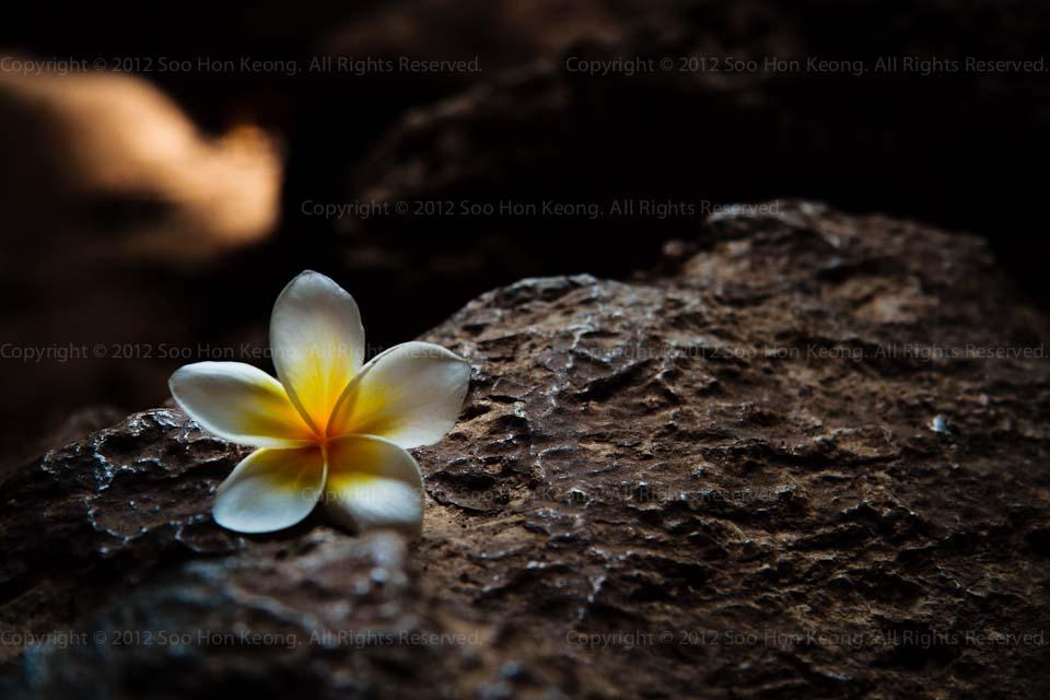 Flower @ Tham Khao Yoi Phetchaburi Thailand