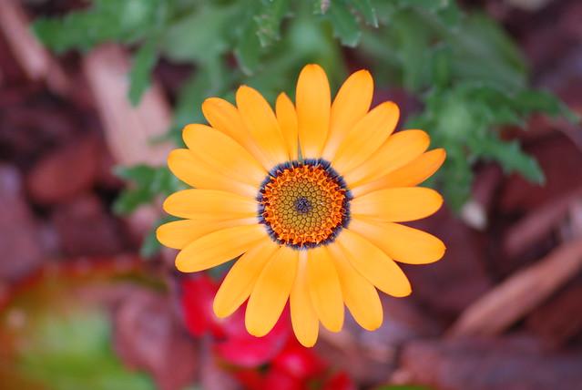Natures Garden Center Brighton Mi