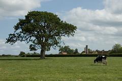 Field, Langstone