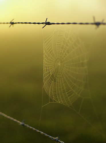 Spiderweb and Barbed Wire